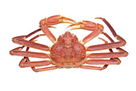Snow crab Banque d'images