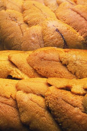 stuff fish: Sea Urchin Stock Photo