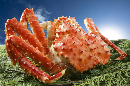expensive food: King crab