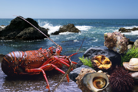 stuff fish: Marine products