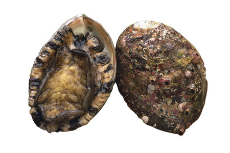 expensive food: Abalone