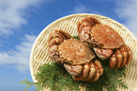 expensive food: Horsehair crab
