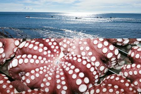 true: True octopus Stock Photo