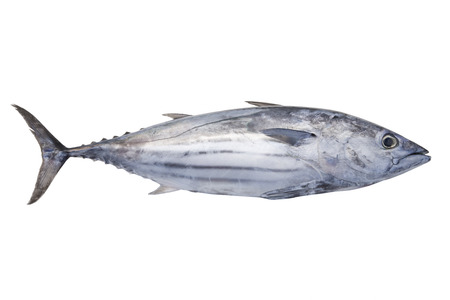 Skipjack tuna Stok Fotoğraf - 42942249