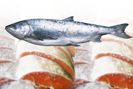 stuff fish: Salmon Stock Photo