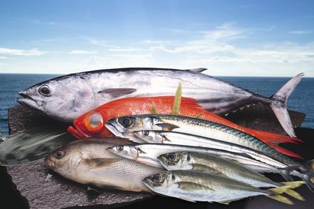 魚介類 写真素材