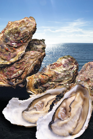 stuff fish: Oyster