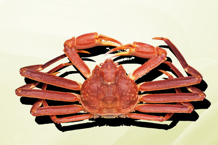 expensive food: Snow crab Stock Photo