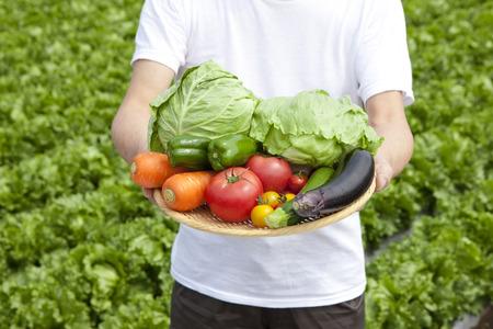 野菜 写真素材 - 42945471