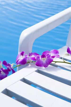 esthetic: Orchid flowers Stock Photo