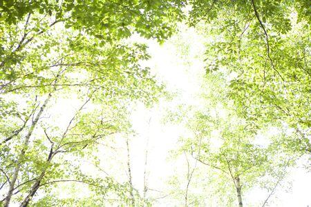 green park: Trees Komagane park Stock Photo