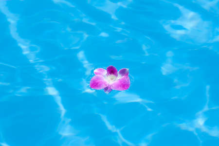 esthetic: Orchid floating on the surface of the water