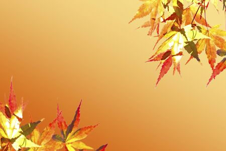 mixed wallpaper: Autumn leaves