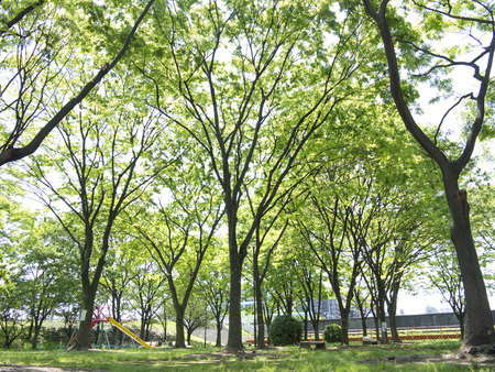 early summer: Early summer of park