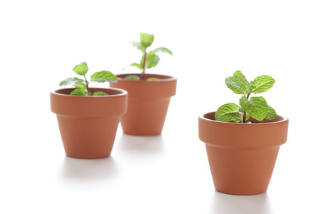 burgeoning: Potted sprout