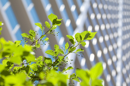 urbanscape: Skyscrapers with fresh green leaves Stock Photo