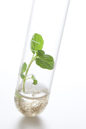 genetic information: Plants grown in a test tube