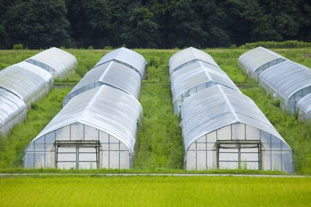 Plastic greenhouse cultivation