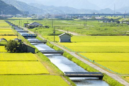 field crop: Toyooka city countryside Stock Photo