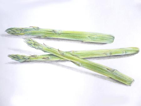 asparagus: Asparagus