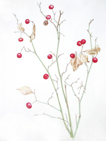 rose: Japanese rose