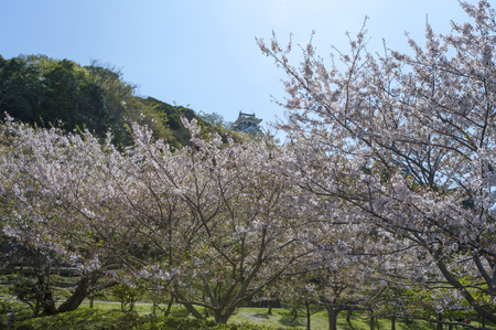 other side of: The castle tower to the other side of the cherry blossoms in full glory