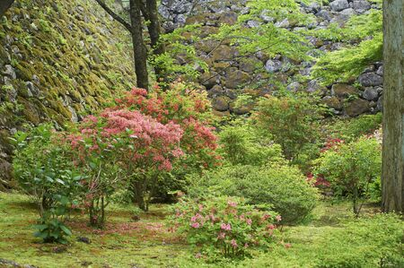 yearning: Azaleas that bloom under the stone wall of the castle tower trace