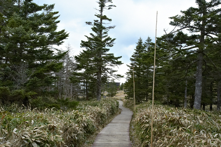 came: A tree way of Kumazasa that Ropuue summit station came into view
