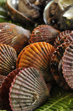 marine crustaceans: Scallops Stock Photo