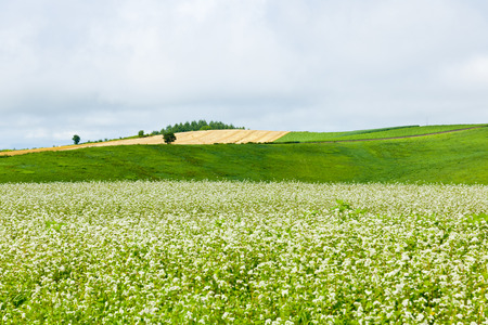 biei: Large panorama of Biei summer