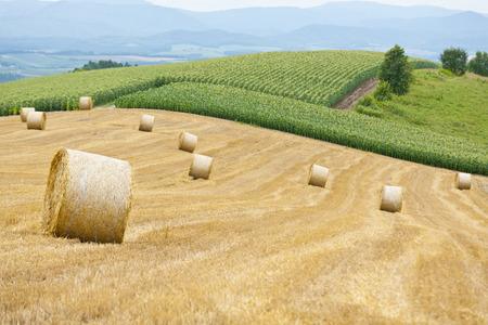 biei: Beautiful hills of Biei
