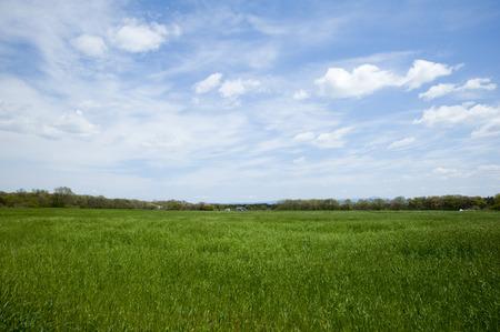 vast: Vast meadow