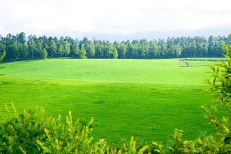 biei: Large panorama of Biei Stock Photo