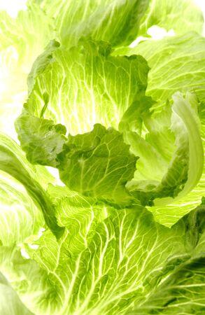 Transmission of lettuce