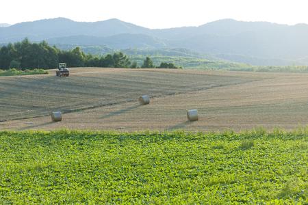 vast: A vast wheat field