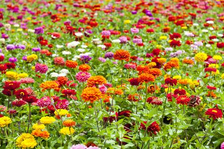 Eine Vielzahl von Blumengarten