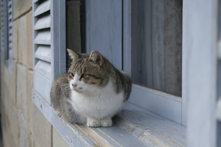 nagasaki: Nagasaki cat Stock Photo