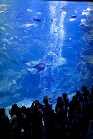 fish tank: Large fish tank Aquarium