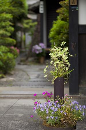 eaves: Eaves of flowers