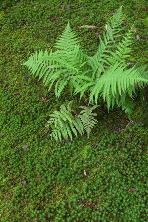 ferns: Moss and ferns
