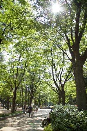 toughness: Fresh green of toughness park