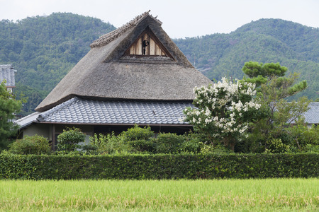thatched roof: Rice fields and thatched roof house