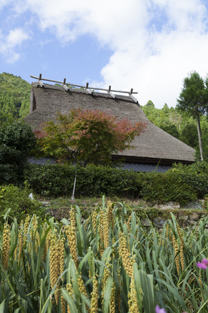 thatched roof: Thatched roof House