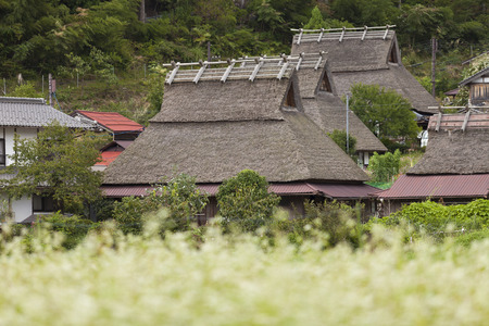 thatched roof: Buckwheat flowers and thatched roof house
