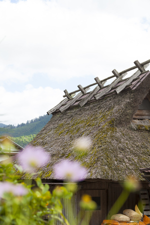 thatched roof: Thatched roof and cosmos