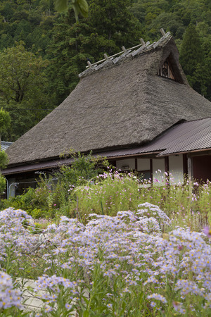 thatched roof: Sion flowers and thatched roof house Stock Photo