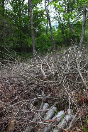 枝が伐採され