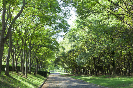 treelined: Tree-lined streets of Oizumi green space