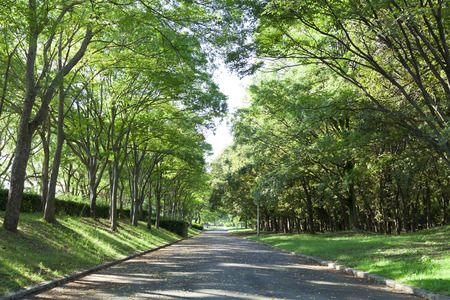 Tree-lined streets of Oizumi green space