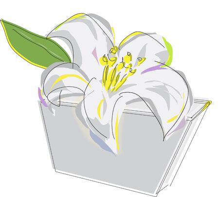 lilium: Lily with line